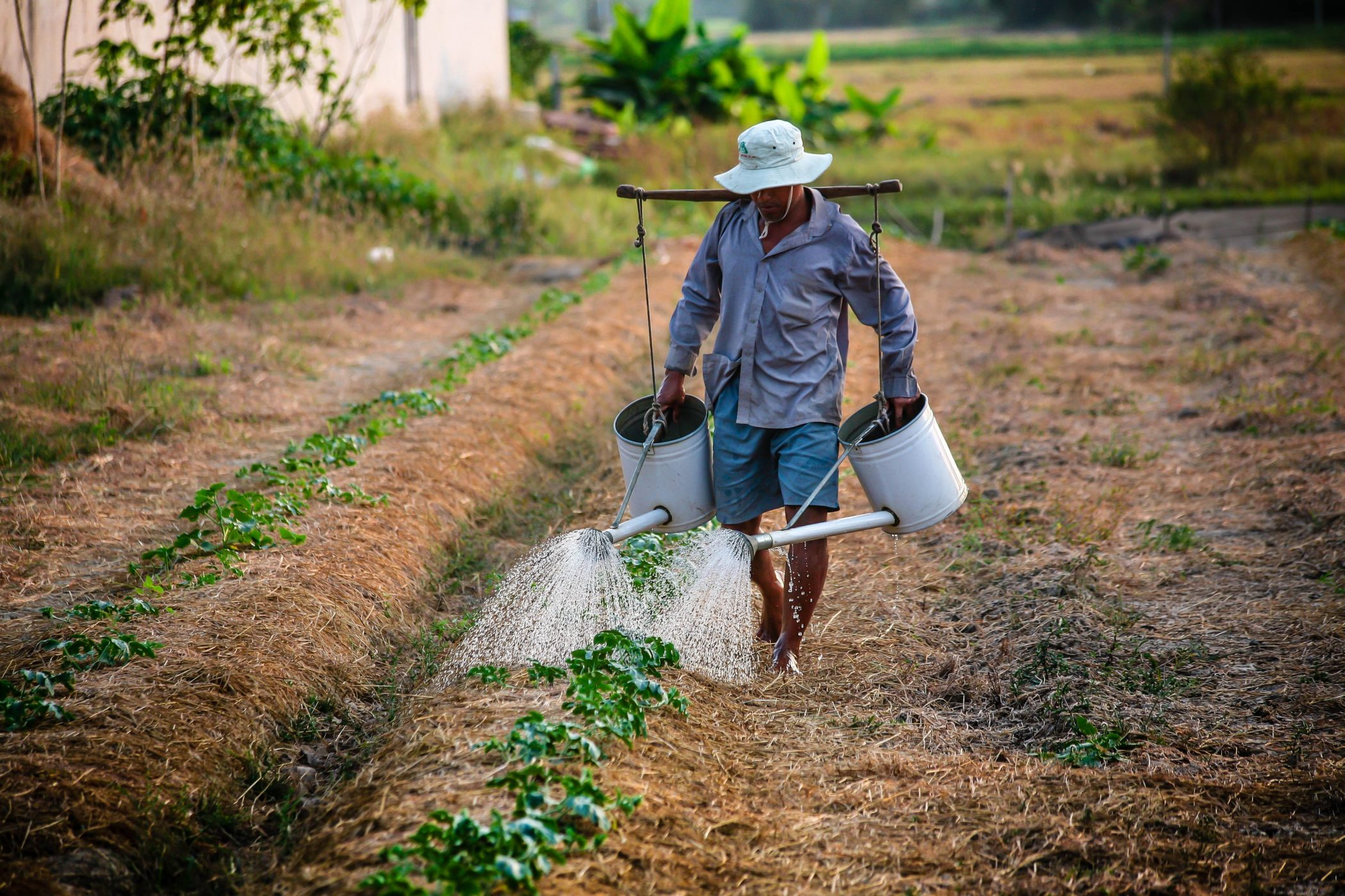 factors responsible for low productivity of Indian agriculture